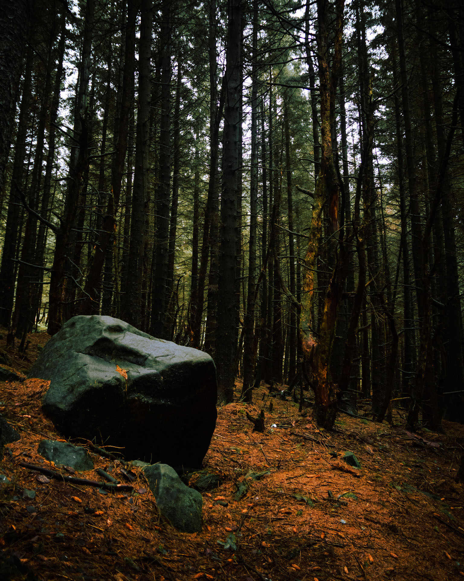 large-boulder-at-snake-woodland